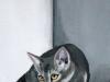 Les chats 2