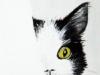 Les chats 9