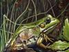 la-grenouille