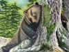 ours-au-repos1